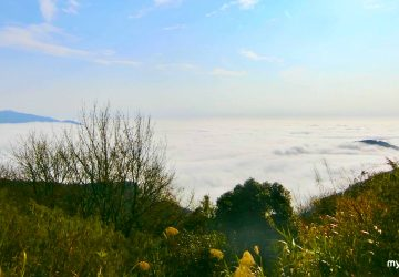 Taiwan   Why Alishan is one of the Must-Go Attractions In Winter
