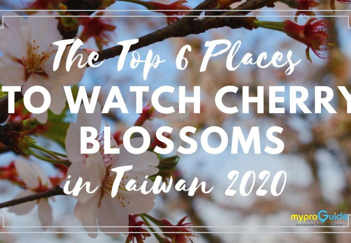 The Top 6 Places To Watch Cherry Blossoms in Taiwan 2020
