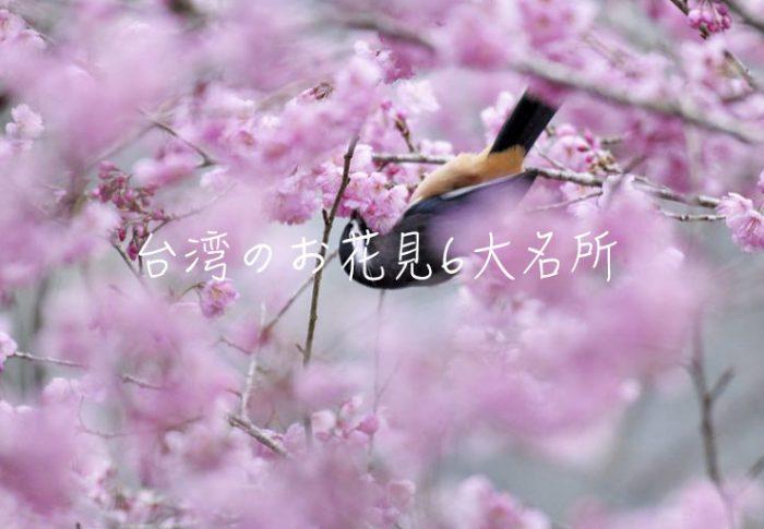 台湾のお花見6大名所