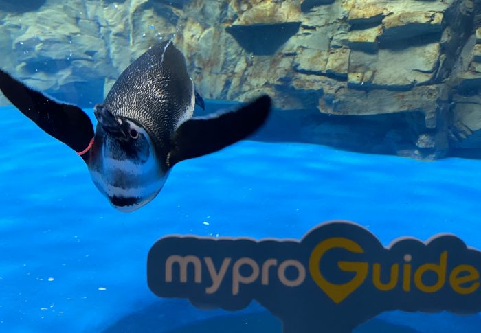 旅遊新地標桃園青埔Xpark!日本八景島最美水族館,與超可愛企鵝同樂